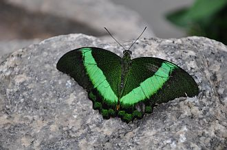 how-to-develop-intuition-green-butterfly