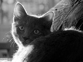 animal-whisperer-kitten