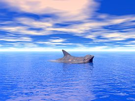 interpreting-dreams-dolphin-in turquoise-sea